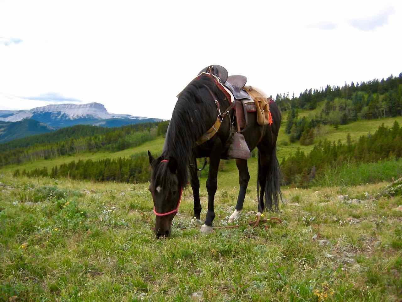 38 sites, 6 horse corrals
